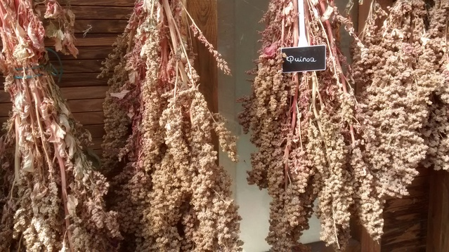 Quinoa, proprietà e benefici. Tutto quello che devi sapere